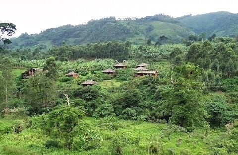 ウガンダ マホガニースプリングスホテル