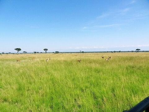 ウガンダ クイーンエリザベス国立公園