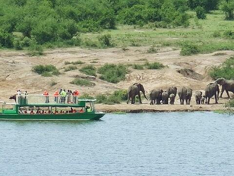ウガンダ ボートサファリ ゾウ