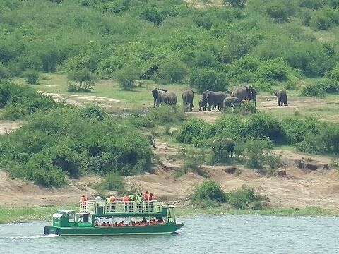 ウガンダ クイーンエリザベス国立公園 ボートサファリ 象