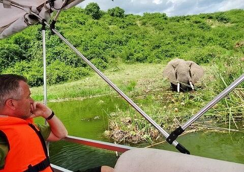 ウガンダ クイーンエリザベス国立公園 ボートサファリ ゾウ
