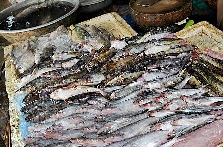 クアディンマーケット タラートクアディン 魚 ビエンチャン ラオス