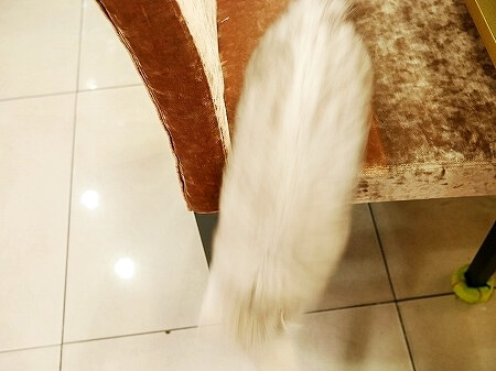 韓国 大邱 テグ ネイル通り ヤシ通り エルザ ネイルサロン 엘사 ジェルネイル 猫 ネコ
