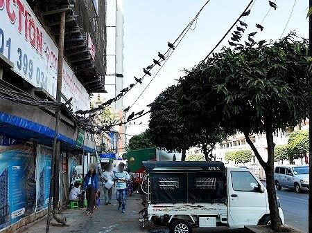ミャンマー ヤンゴン 鳥 ハト