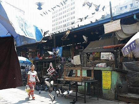 ミャンマー ヤンゴン 鳥 ハト 鳩