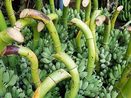 ミャンマー ヤンゴン インセイン市場 バナナ