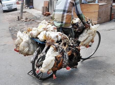 ミャンマー ヤンゴン 鶏 アヒル