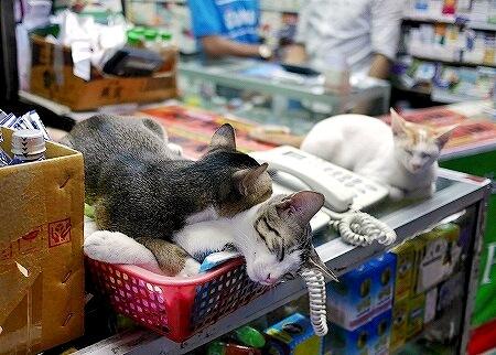 ミャンマー ヤンゴン ダウンタウン 看板猫 薬屋
