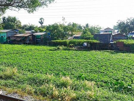 ミャンマー ヤンゴン 環状線 鉄道 景色