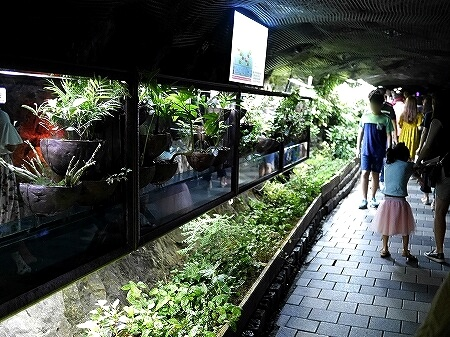 韓国 光明洞窟 洞窟植物園
