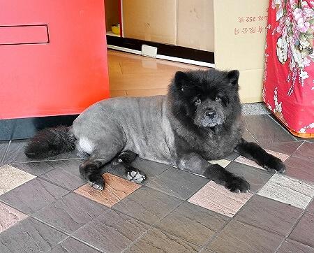 台湾 台北 10月上旬 気候 服装 犬