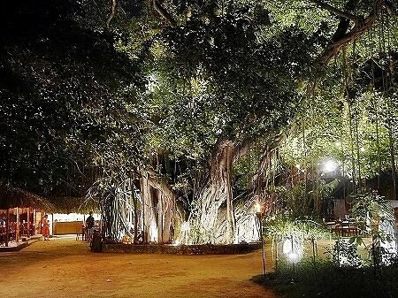 スリランカ コロンボ NUGA GAMA ヌガガマ Colombo レストラン ガジュマル 木