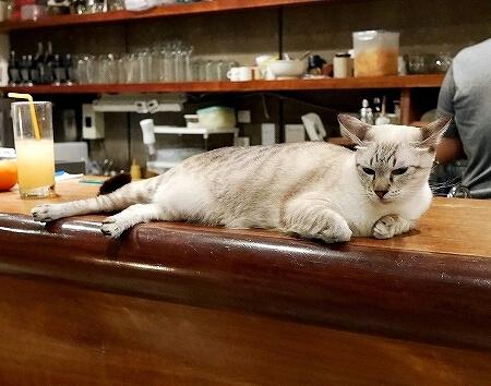 台湾 台北 猫カフェ ネコ 極簡cafe 極簡咖啡