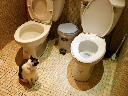 台湾 台北 猫カフェ ネコ 極簡cafe 極簡咖啡 トイレ