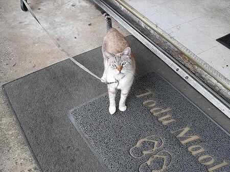 グアム コンビニエンスストア大阪 ネコ 看板猫
