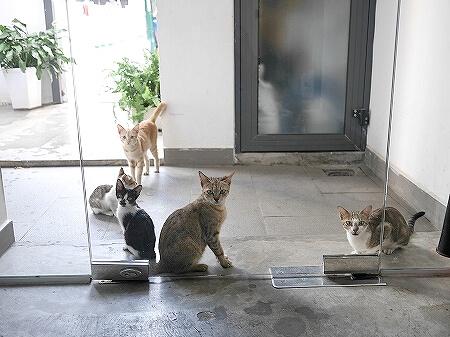 ベトナム ホーチミン ザ ドーム サイゴン The Dorm Saigon ネコ