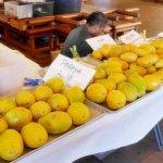 ハワイ ハイアットリージェンシーホテル ファーマーズマーケット 火曜日 パパイヤ マンゴー フルーツ