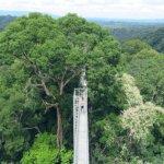 ブルネイ ウル・テンブロン国立公園 日帰りツアー ウル・トゥンブロン国立公園、Ulu Temburong National Park 英語ガイド Freme Travel フレーミートラベル 旅行記 ブログ キャノピーウォーク