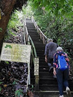 ブルネイ ウル・テンブロン国立公園 日帰りツアー ウル・トゥンブロン国立公園、Ulu Temburong National Park 英語ガイド Freme Travel フレーミートラベル 旅行記 ブログ キャノピーウォーク 道 階段 トレッキング