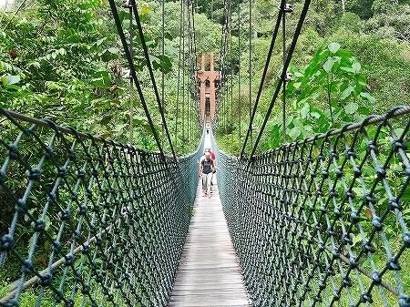 ブルネイ ウル・テンブロン国立公園 日帰りツアー ウル・トゥンブロン国立公園、Ulu Temburong National Park 英語ガイド Freme Travel フレーミートラベル 旅行記 ブログ キャノピーウォーク 道 階段 吊り橋