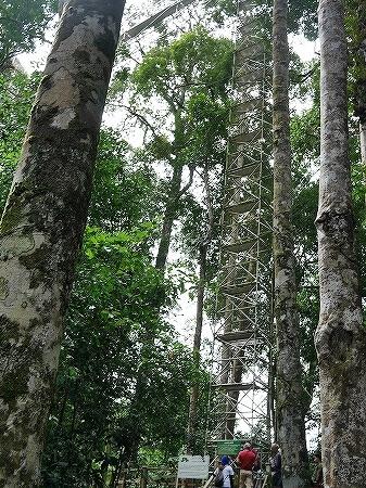 ブルネイ ウル・テンブロン国立公園 日帰りツアー ウル・トゥンブロン国立公園、Ulu Temburong National Park 英語ガイド Freme Travel フレーミートラベル 旅行記 ブログ キャノピーウォーク 道 階段