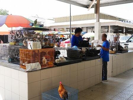 ブルネイ キアンゲマーケット Kianggeh Market 市場 観光 旅行記 ブログ 動物 ペット