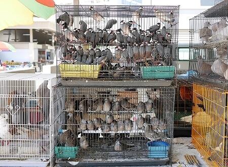 ブルネイ キアンゲマーケット Kianggeh Market 市場 観光 旅行記 ブログ 動物 ペット 鳥 文鳥