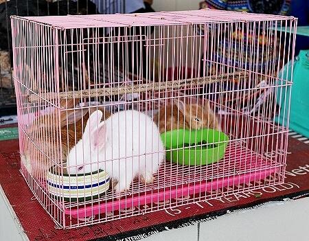 ブルネイ キアンゲマーケット Kianggeh Market 市場 観光 旅行記 ブログ 動物 ペット うさぎ