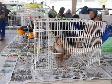 ブルネイ キアンゲマーケット Kianggeh Market 市場 観光 旅行記 ブログ 動物 ペット サル