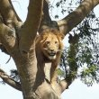 ゴリラ以外もちゃんといる!ウガンダのサファリで出会った動物たち(クイーンエリザベス国立公園)