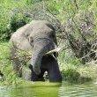 実はゾウの楽園!ウガンダでリアルジャングルクルーズ!