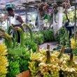 コロンボのバナナすぎる市場「マニングマーケット」でスリランカ人の優しさを再認識!(Manning Market)